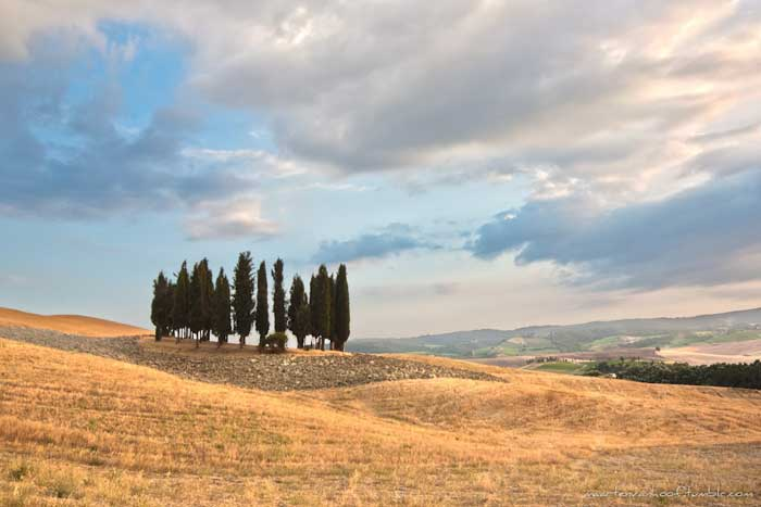 Tuscany Cypresses, Val d'Orcia