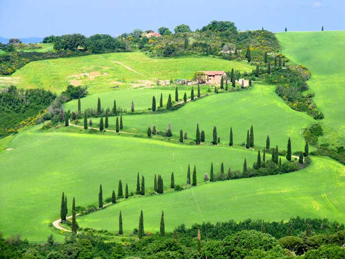 Valdorcia Hills with Cypress Trees