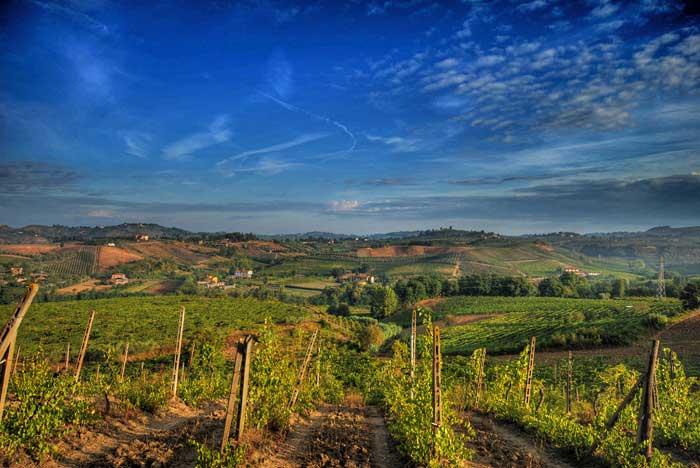 Chianti Vineyards forRenowned Chianti Wine