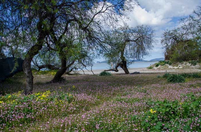 Delightul Alghero Landscape, Northwestern Coast of Sardinia